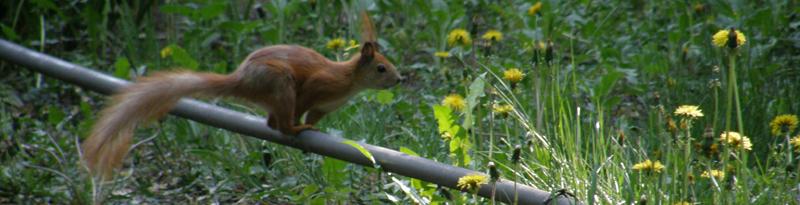 Squirrel web — просте веб-будівництво